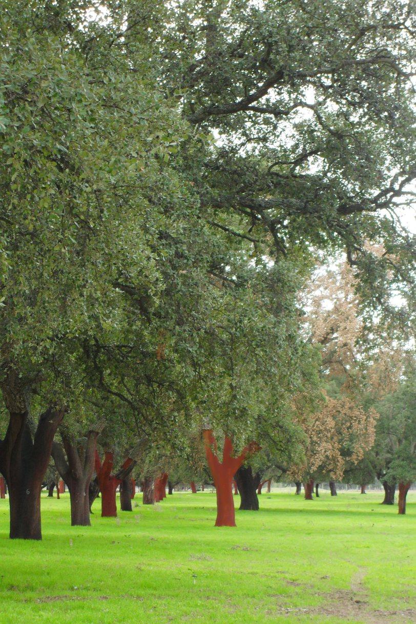corkforest