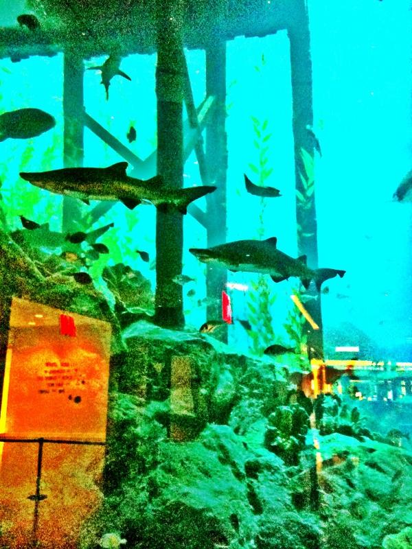 sharks in the aquarium