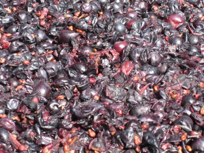 fermenting on the skins shiraz